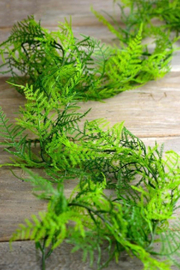 The Birch Tree 6ft. Asparagus Fern - Product Mini Image