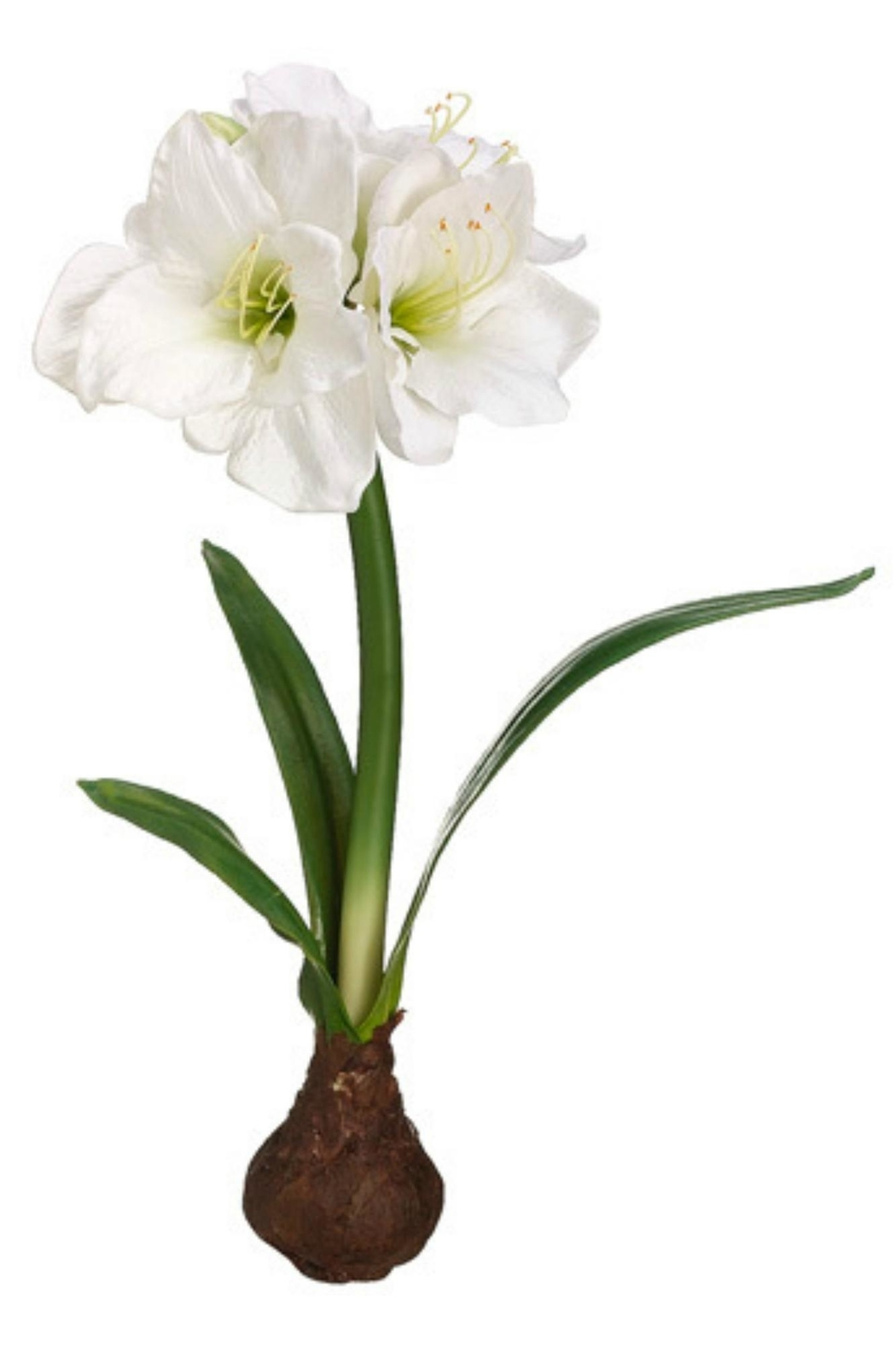 Allstate Floral  Amaryllis Freestanding Bulb - Front Cropped Image