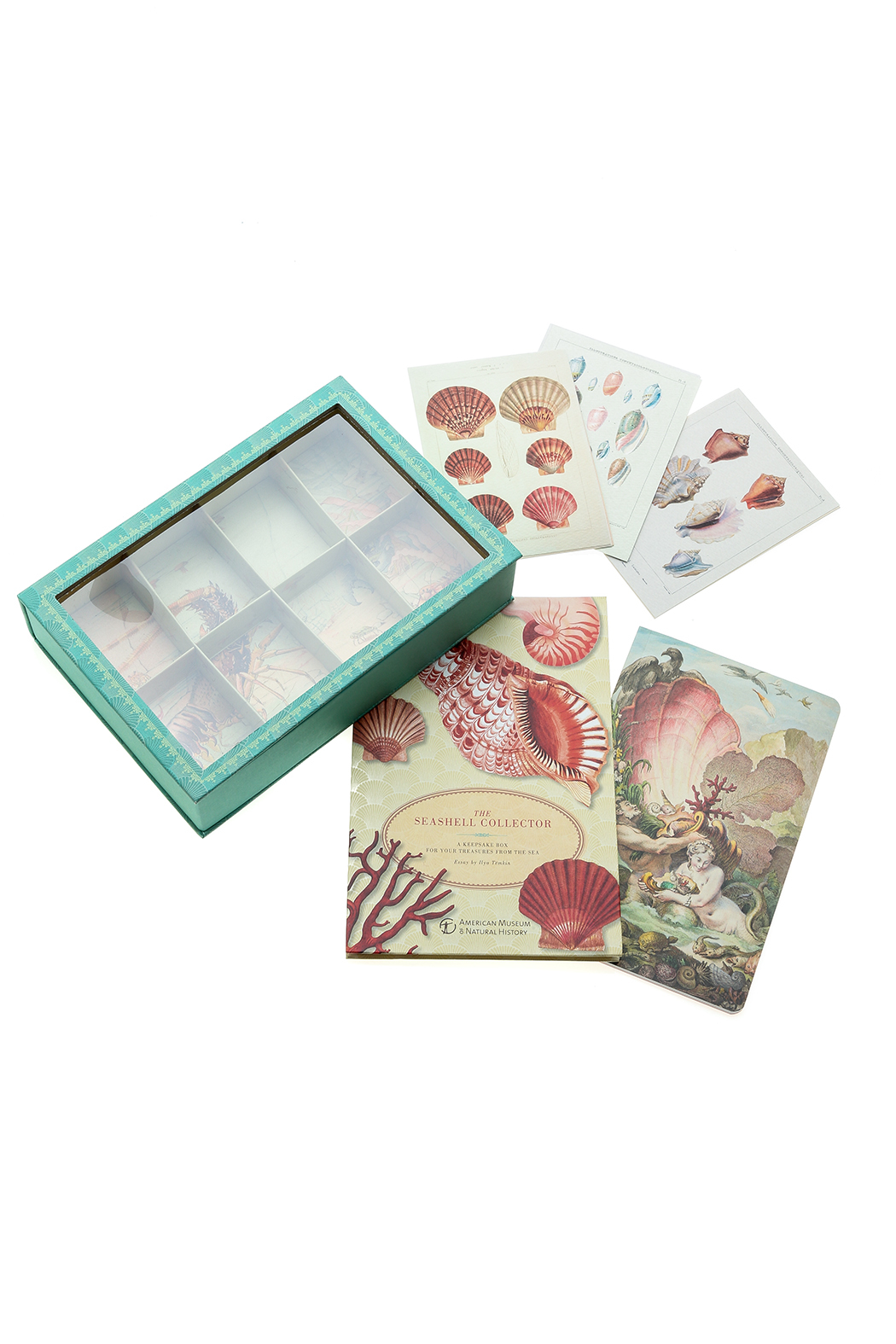 American Museum of Natural History Seashell Collector Kit - Main Image