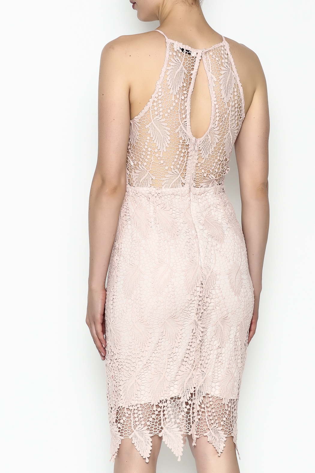 Ark & Co. Lace Bodycon Dress - Back Cropped Image
