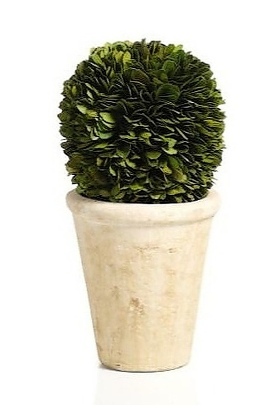 The Birds Nest BOXWOOD POTTED BALL - 10 INCHES - Main Image