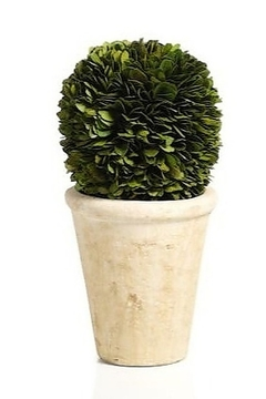 The Birds Nest BOXWOOD POTTED BALL - 10 INCHES - Product List Image