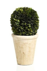 The Birds Nest BOXWOOD POTTED BALL - 10 INCHES - Product Mini Image