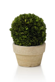 The Birds Nest BOXWOOD POTTED BALL - 7 INCHES - Front cropped