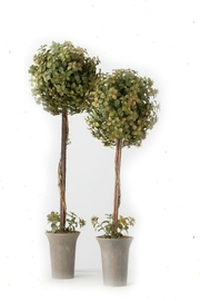 Sullivans Boxwood Topiary Set - Front cropped