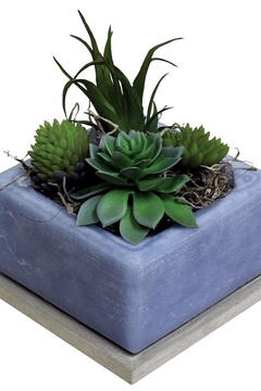 Shoptiques Product: Cactus Water Candle