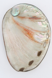 CDO  Sterling Shell Pendant - Front cropped