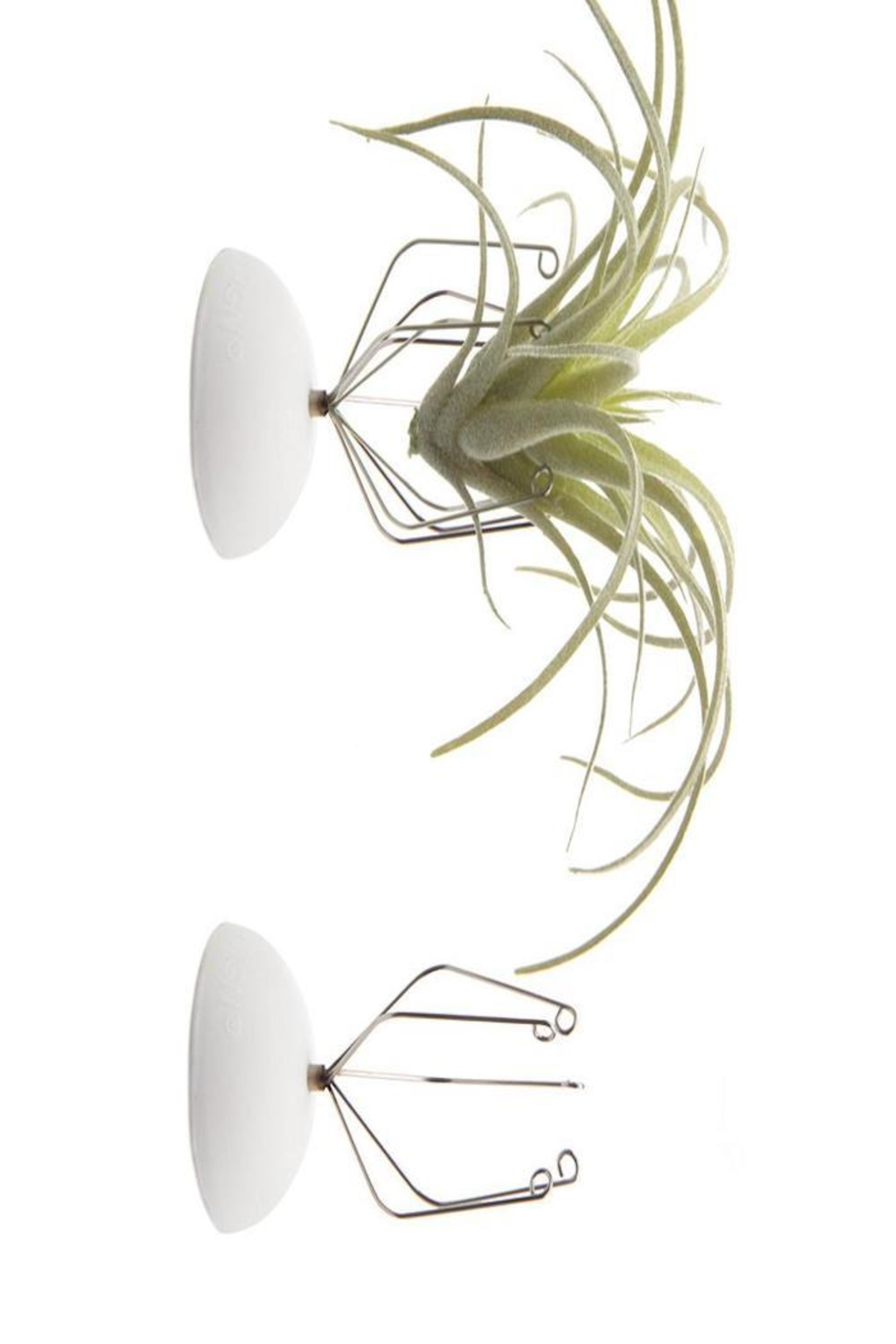 Chive Air Plant Holder - Main Image