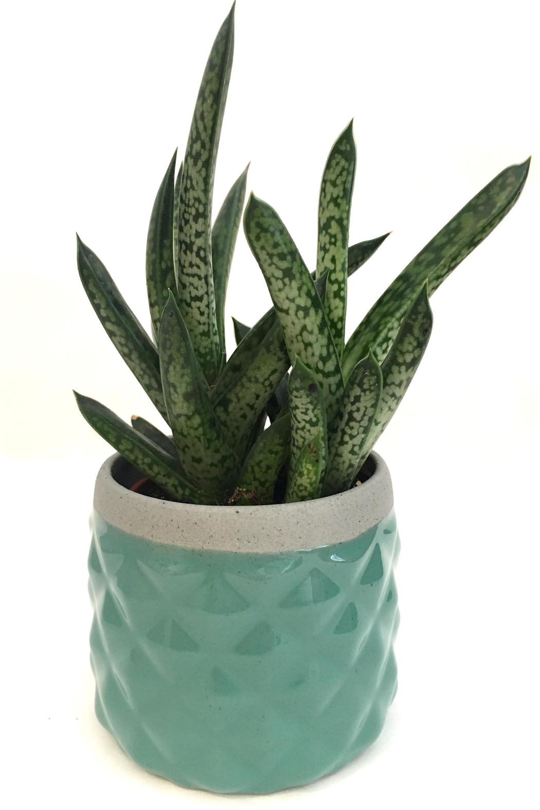 Chive Sage Diamond Planter - Front Cropped Image