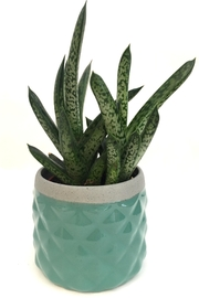 Chive Sage Diamond Planter - Front cropped