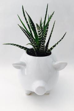 Chive White Pig Planter - Alternate List Image