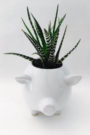 Chive White Pig Planter - Product Mini Image