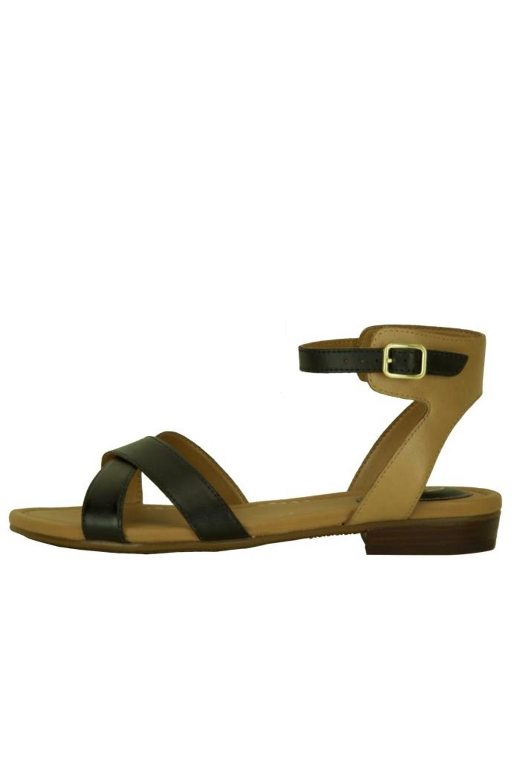 95582a5cb Clarks Viveca Zeal Sandal from Washington by Magnolia s Shoes ...