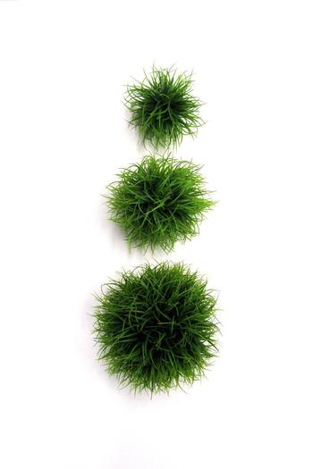 Expressions Decorative Grass Balls From Canada Shoptiques Awesome Decorative Grass Balls