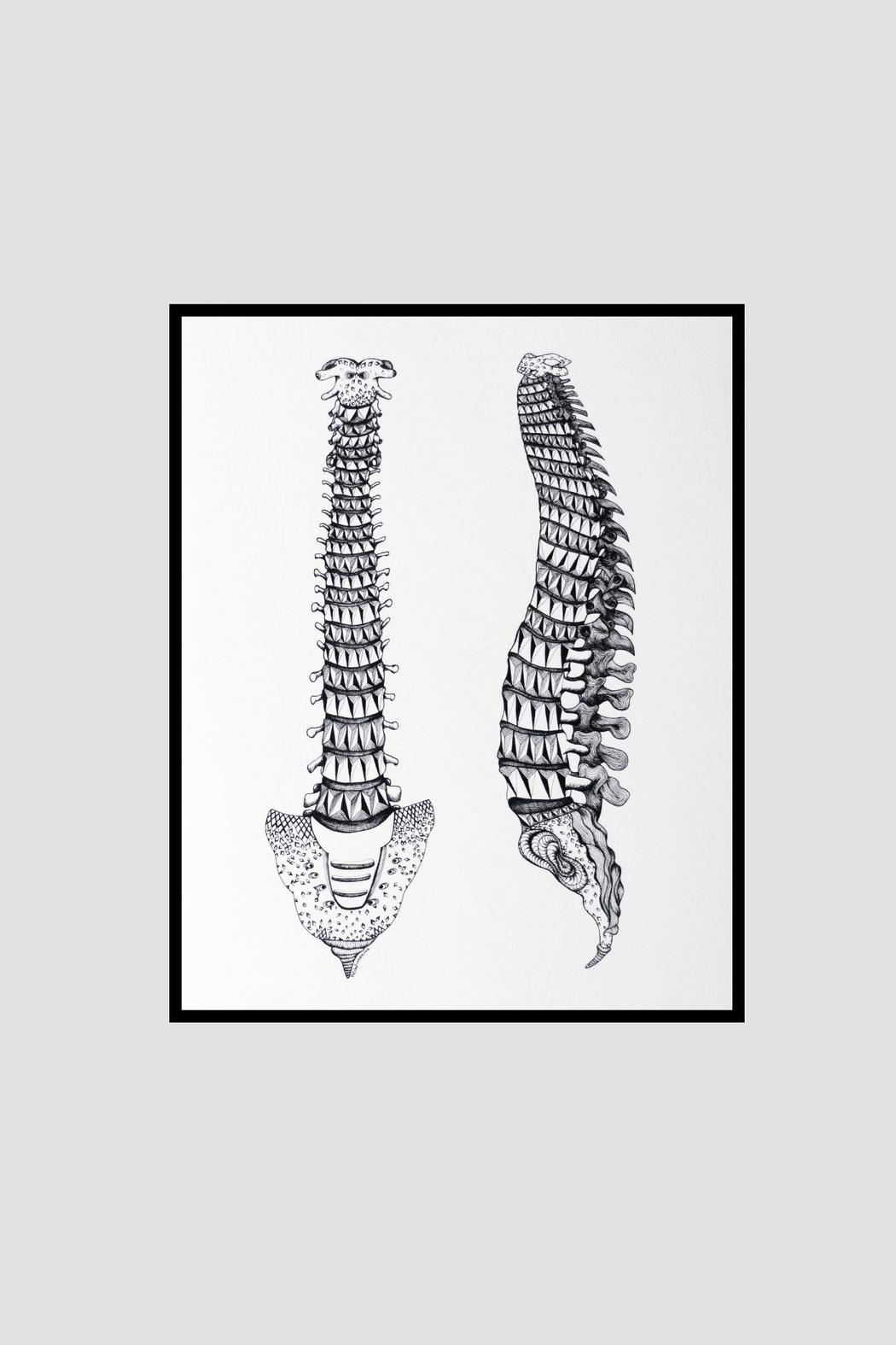 Dime & Regal Spine Anatomy Print - Side Cropped Image