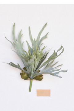 Homart Faux Staghorn Fern - Product List Image
