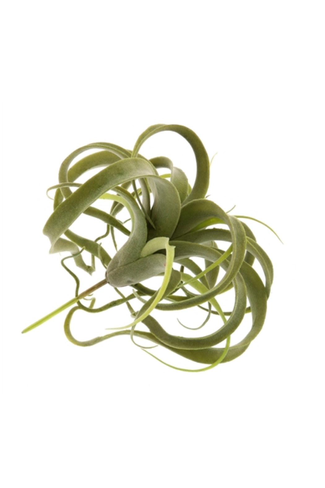 Homart Faux Tilandsia Air Plant - Side Cropped Image