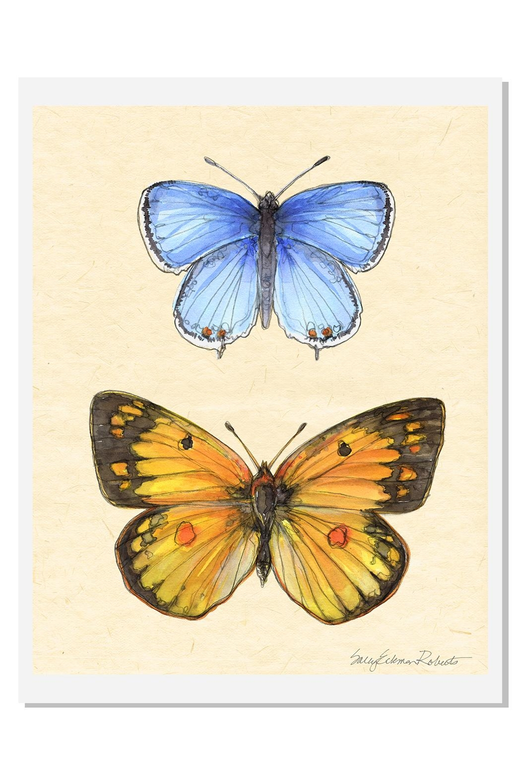 Sally Eckman Roberts Field Guild Butterfly1 - Main Image