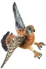 Folkmanis Kestrel Hand Puppet - Front cropped