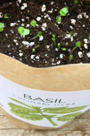 Garden in a Bag  | Basil - Front cropped