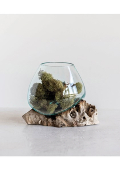 Shoptiques Product: Glass Planter on Natural Wood Base