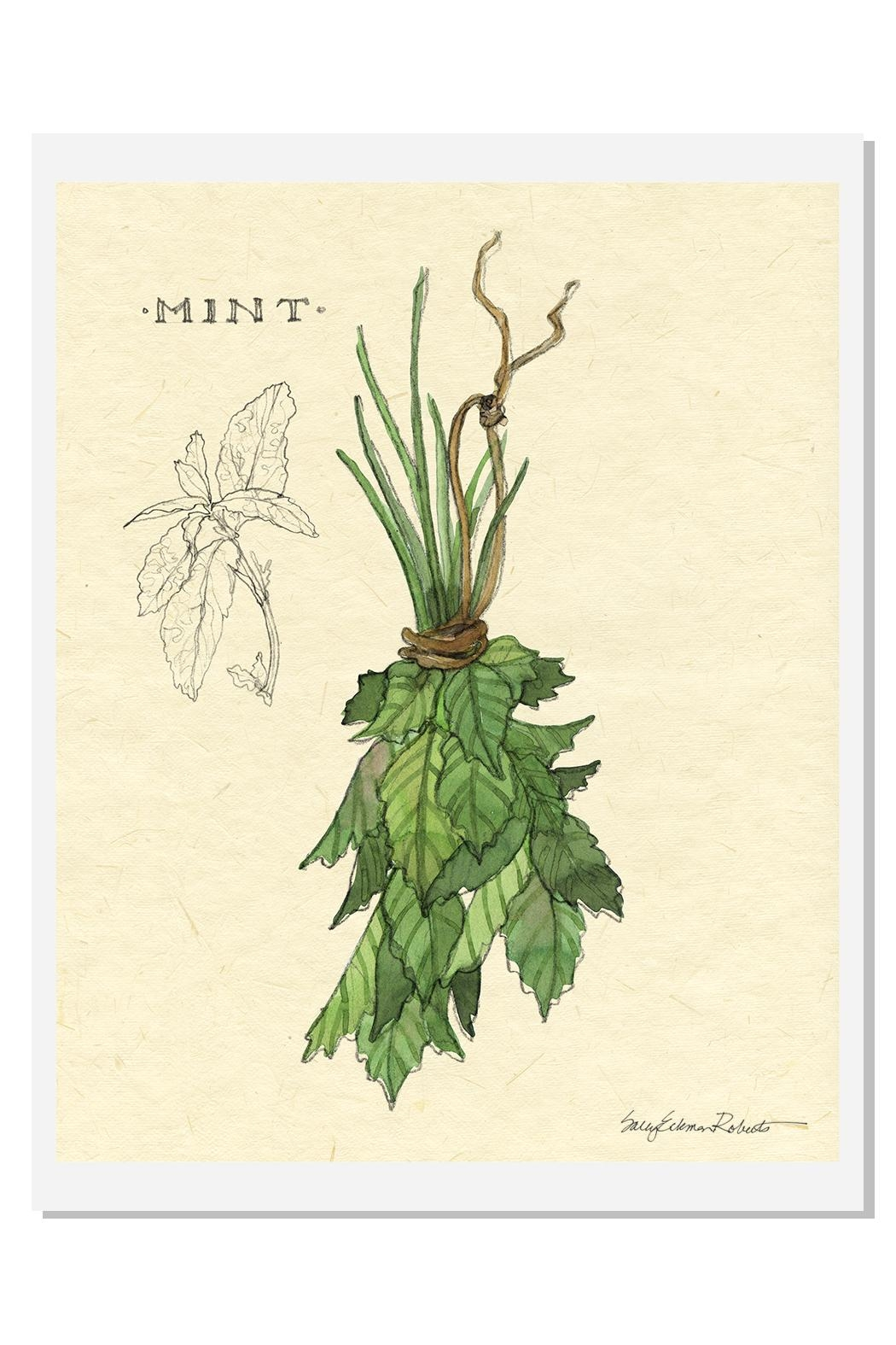 Sally Eckman Roberts Hanging Mint Print - Front Cropped Image