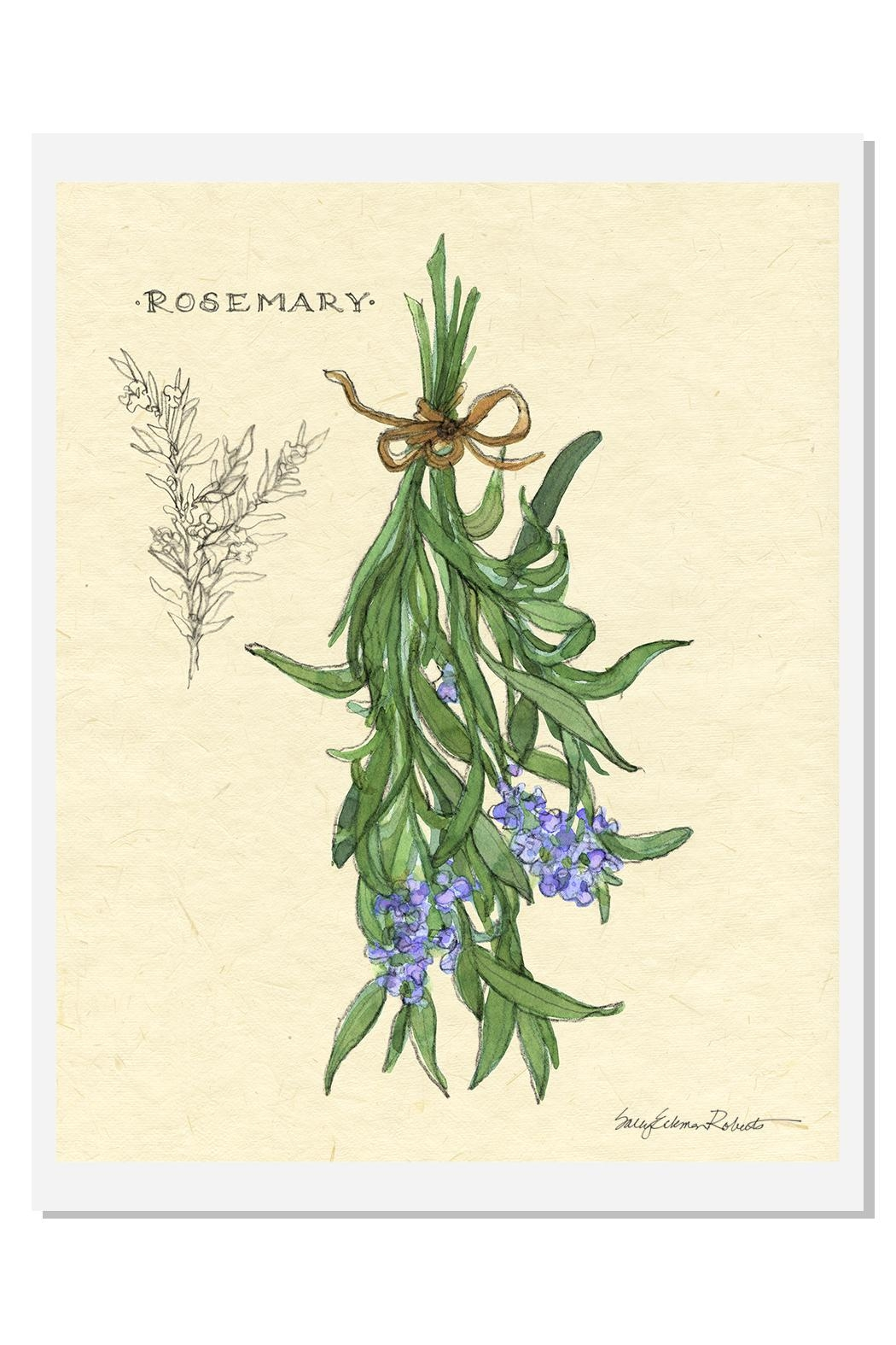 Sally Eckman Roberts Hanging Rosemary Print - Front Cropped Image