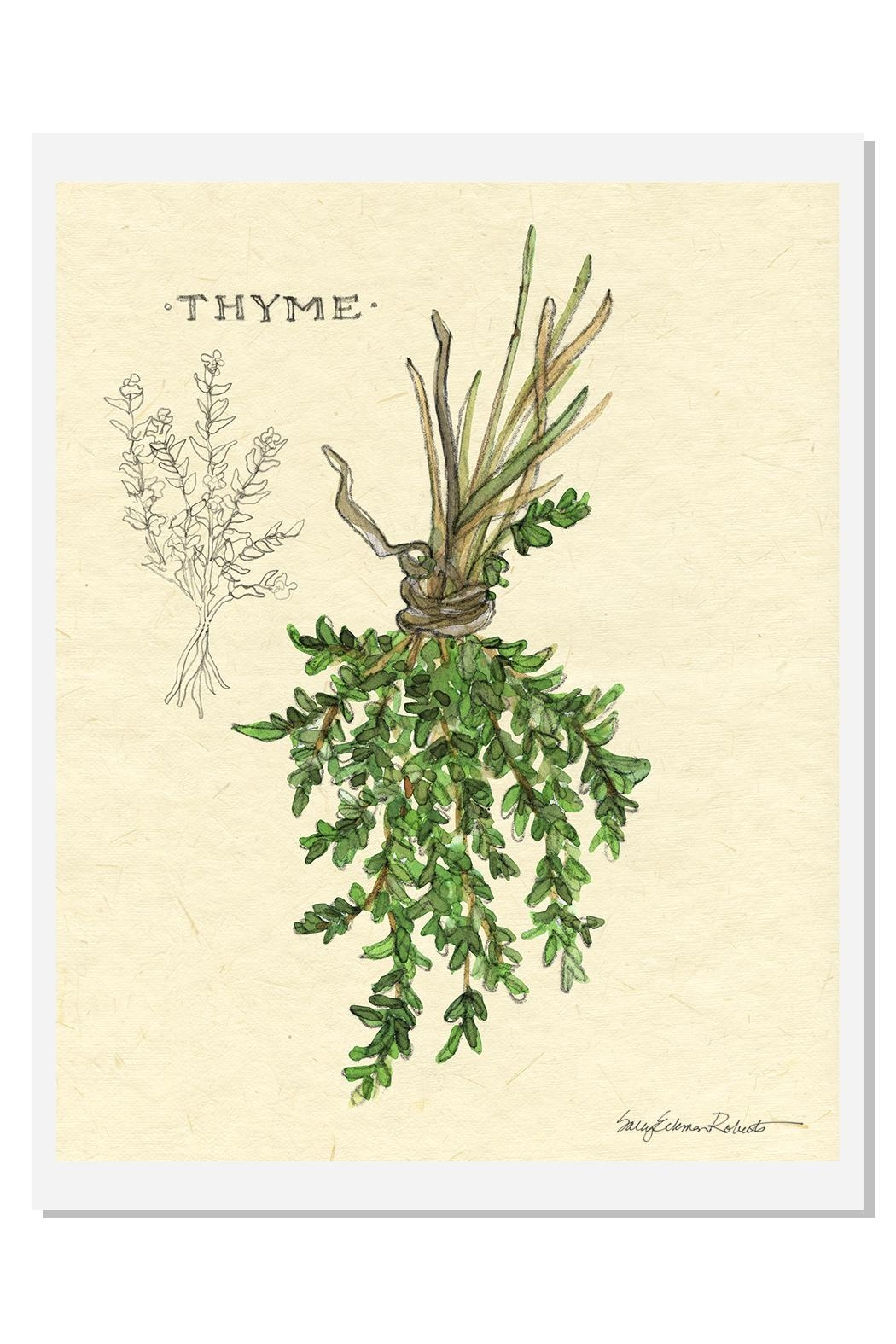 Sally Eckman Roberts Hanging Thyme Print - Front Cropped Image