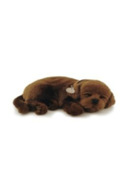 Hape Perfect Petz - Front cropped