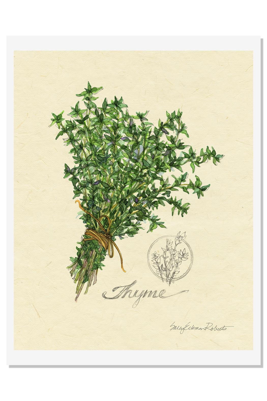 Sally Eckman Roberts Herbs Print-Thyme - Main Image