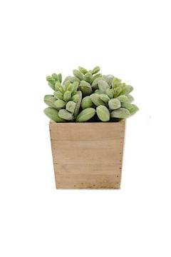 Shoptiques Product: Faux Potted Succulent