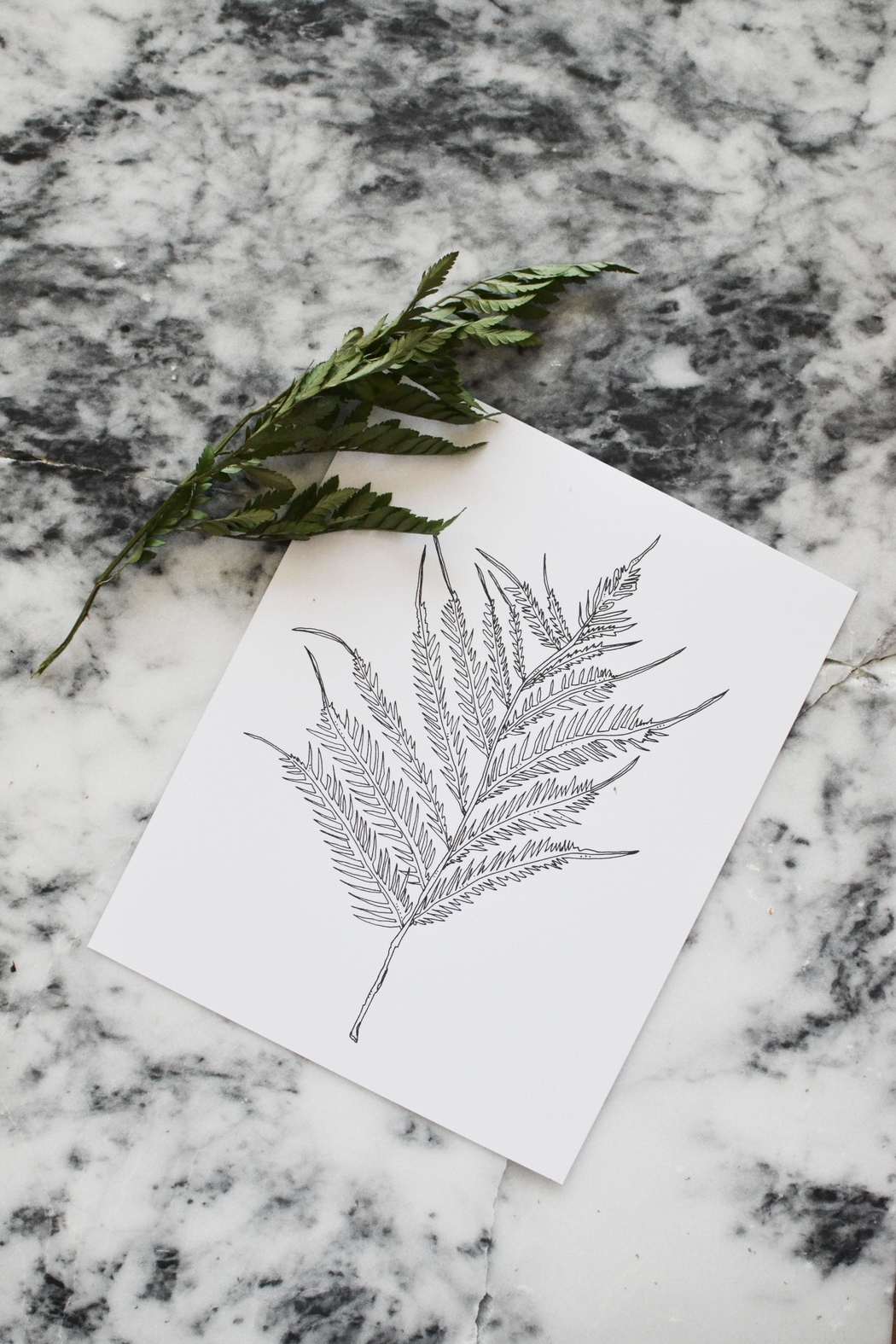KP Studio Fern Decor Print - Front Cropped Image