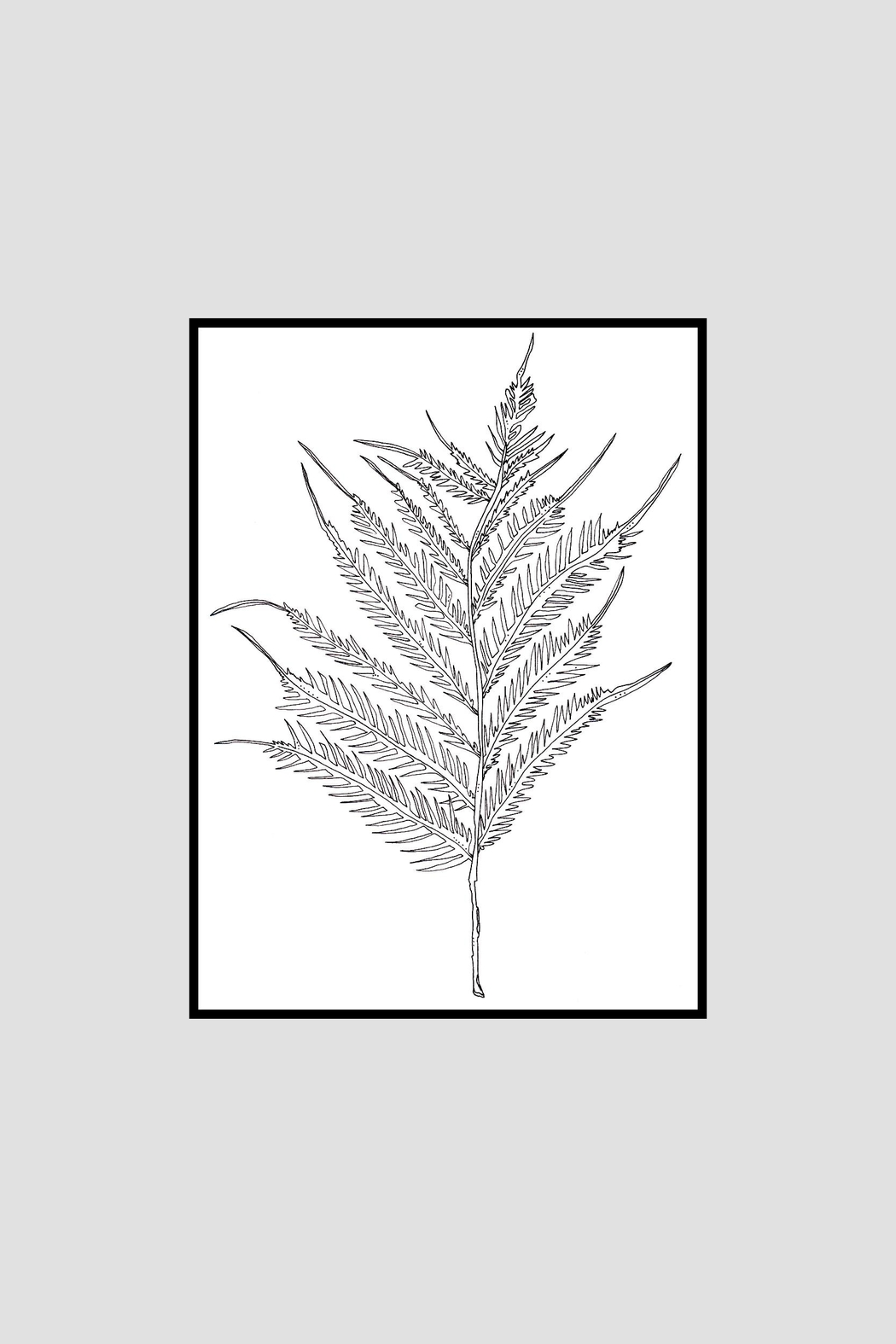 KP Studio Fern Decor Print - Main Image