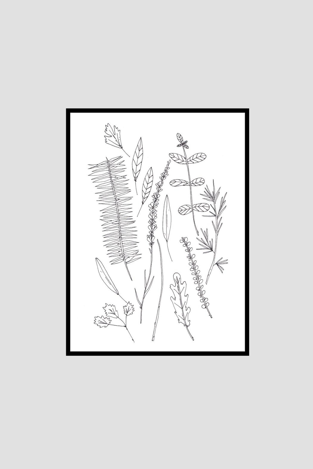 KP Studio Herb Decor Print - Side Cropped Image