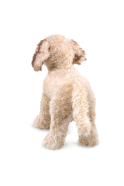 Folkmanis Labradoodle Hand Puppet - Front full body