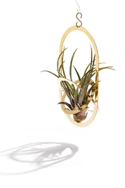 Linie Clara Kaesdorf Air Plant Holder - Product Mini Image