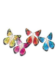 Tops Malibu  Magic Flying Butterfly- Rainbow - Front cropped