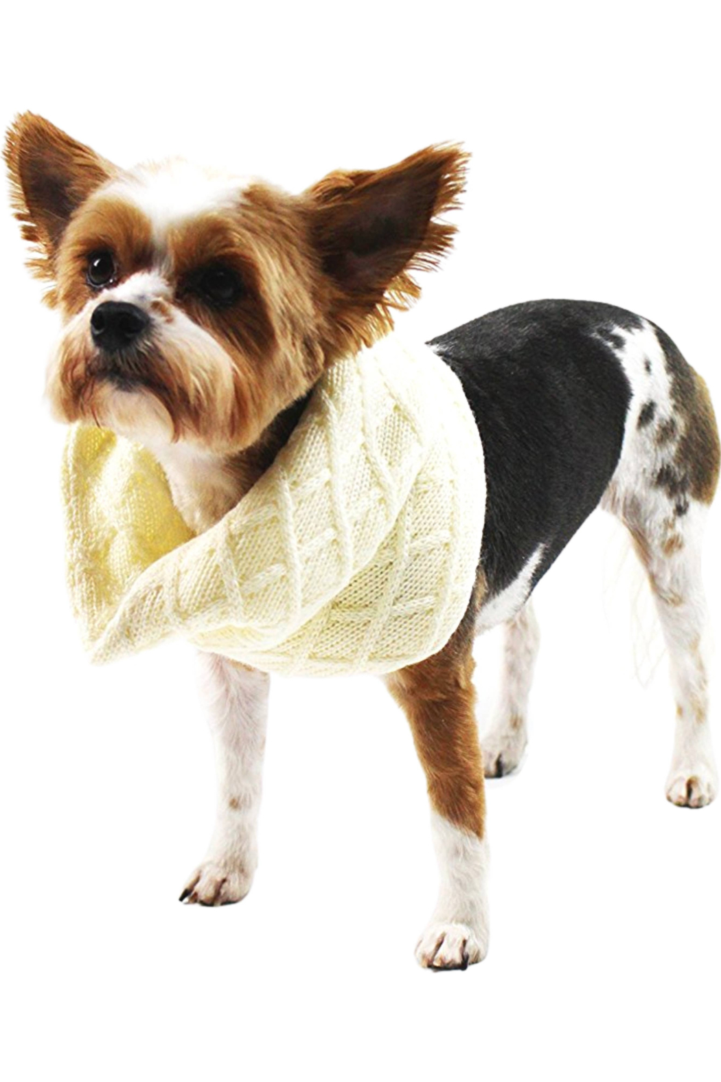 Midlee Designs Midlee Cream Knit Infinity Scarf for Dogs(Large) - Main Image