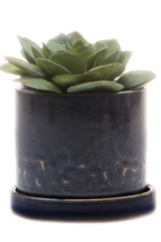 Chive Minute Pot - Front cropped