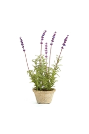 Napa Home & Garden French Lavender Plant - Product Mini Image