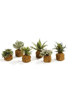 Napa Home & Garden Mixed Succulent Drop Ins - Product List Image