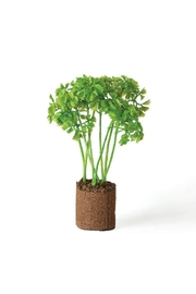Napa Home & Garden Parsley Plant Drop In - Product Mini Image