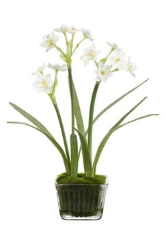 All State Floral Narcissus In Glass - Alternate List Image