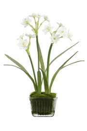 All State Floral Narcissus In Glass - Product Mini Image