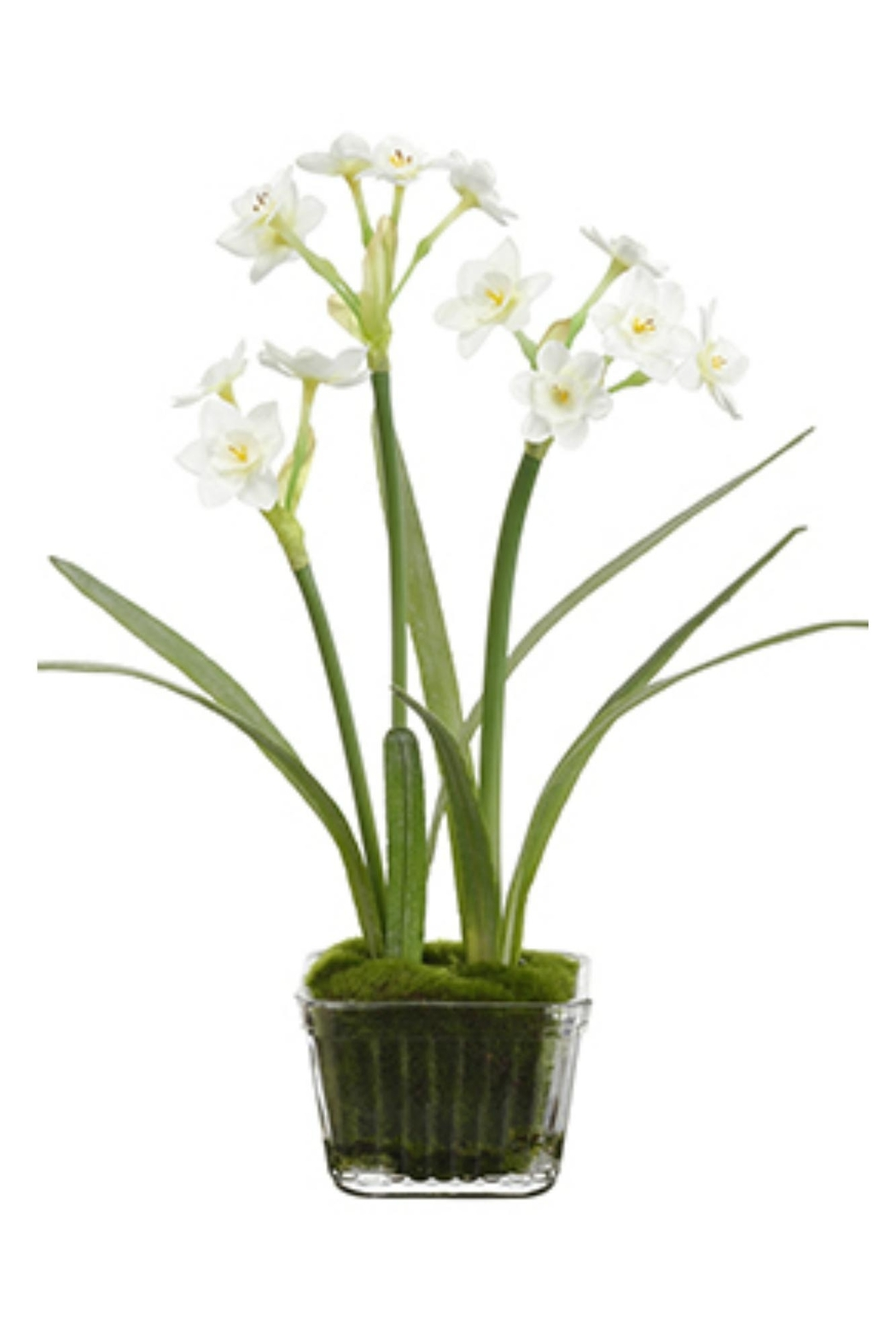 All State Floral Narcissus In Glass - Main Image