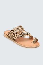 Dolce Vita Nelly Leopard Flat - Front full body