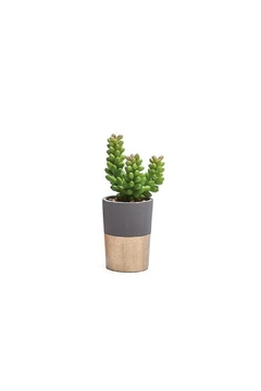 Torre & Tagus Oro Faux Succulent - Alternate List Image