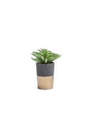 Torre & Tagus Oro Faux Succulent - Product Mini Image