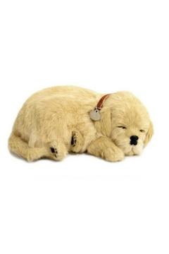Shoptiques Product: Sleeping Golden Retriever