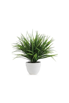 Torre & Tagus Potted Grass Plant - Product List Image